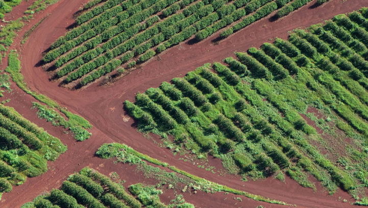Update: Hawaii First to Ban Dangerous Chlorpyrifos Pesticide