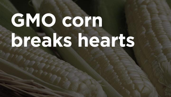 Corn's Part in an Upward Trend Yielding Downward Results